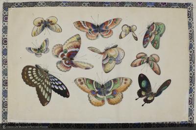 http://lbry-web-002.amnh.org/san/naturalhistories/b11896474_5.jpg