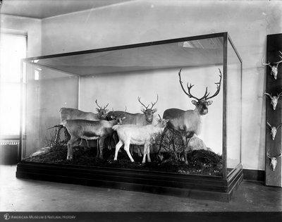 http://images.library.amnh.org/d/t/8x10/0001/00003362_l.jpg