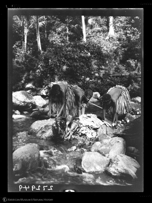 http://lbry-web-002.amnh.org/san/to_upload/Beck-PapuaNewGuinea/W-4x5-negs/272949.jpg