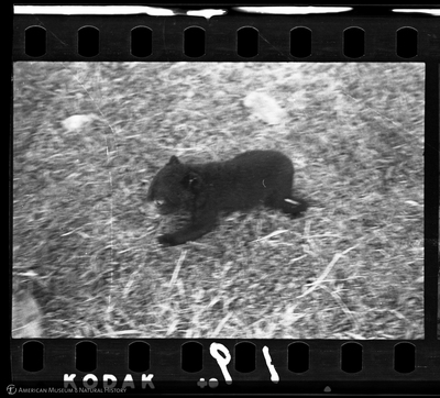http://lbry-web-002.amnh.org/san/to_upload/35mm/VHC-O019.jpg
