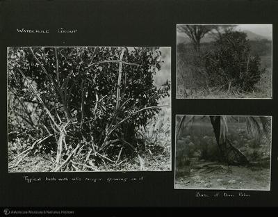 http://lbry-web-002.amnh.org/san/mo_exhibition/ppc_533_b12_f267_008.jpg