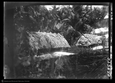 http://lbry-web-002.amnh.org/san/to_upload/Beck-PapuaNewGuinea/W-4x5-negs/273223.jpg