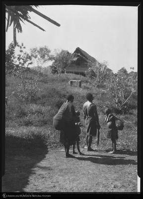 http://lbry-web-002.amnh.org/san/to_upload/Beck-PapuaNewGuinea/NG-5x7-negs/115703.jpg