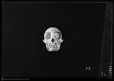 http://lbry-web-002.amnh.org/san/to_upload/5x7/19089.jpg