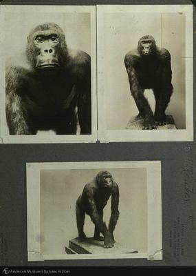 http://lbry-web-002.amnh.org/san/mo_exhibition/ppc_533_b02_f031_003.jpg
