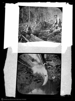 http://lbry-web-002.amnh.org/san/to_upload/5x7/19659.jpg