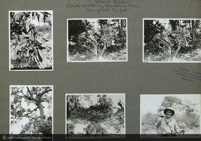 http://lbry-web-002.amnh.org/san/mo_exhibition/ppc_533_b12_f264_004.jpg