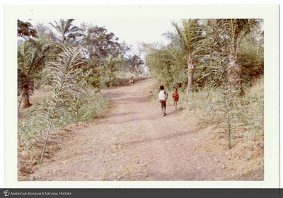 http://lbry-web-002.amnh.org/san/photoprintcollections/Arth/ppc-a78-100213267-07.jpg