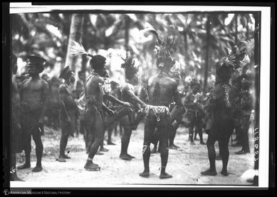 http://lbry-web-002.amnh.org/san/to_upload/Beck-PapuaNewGuinea/NG-5x7-negs/115657.jpg