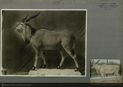http://lbry-web-002.amnh.org/san/mo_exhibition/ppc_533_b01_f020_001.jpg