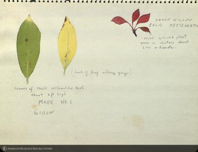 http://lbry-web-002.amnh.org/san/mo_exhibition/art003_b2_10.jpg