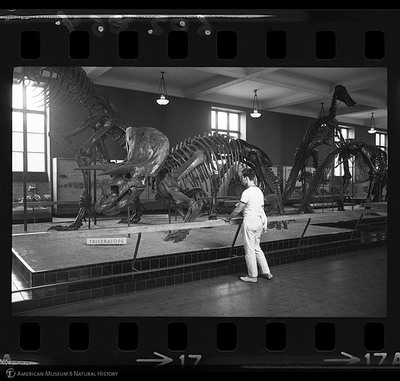 http://lbry-web-002.amnh.org/san/to_upload/35mm_halls_new/602864_17.jpg