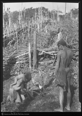 http://lbry-web-002.amnh.org/san/to_upload/Beck-PapuaNewGuinea/NG-5x7-negs/115548.jpg