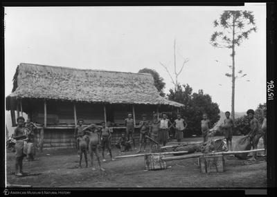 http://lbry-web-002.amnh.org/san/to_upload/Beck-PapuaNewGuinea/NG-5x7-prints/115786.jpg