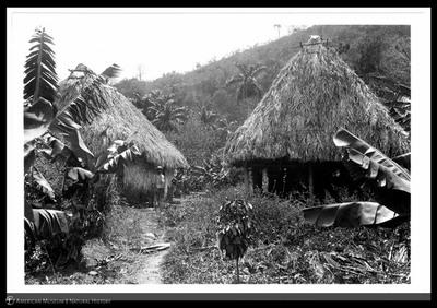 Frank Michler Chapman's field camp, showing Cuban huts, at El Nacimiento de San Juan de Letrán, near Trinidad, Cuba, 1892