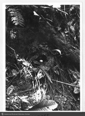 http://lbry-web-002.amnh.org/san/to_upload/Beck-PapuaNewGuinea/NG-5x7-prints/115588.jpg