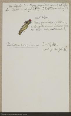 http://lbry-web-002.amnh.org/san/to_upload/titianbutterflies/b1179161_28.jpg