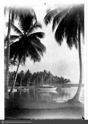 http://lbry-web-002.amnh.org/san/to_upload/Beck-PapuaNewGuinea/NG-5x7-prints/115664.jpg