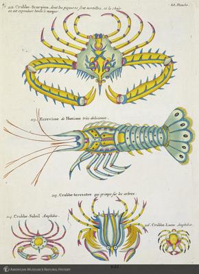 http://lbry-web-002.amnh.org/san/naturalhistories/b10715216_1.jpg