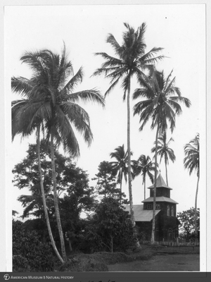 http://lbry-web-002.amnh.org/san/to_upload/Beck-PapuaNewGuinea/NG-5x7-prints/115575.jpg