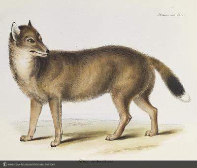 http://lbry-web-002.amnh.org/san/naturalhistories/b10187236_6.jpg