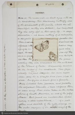 http://lbry-web-002.amnh.org/san/to_upload/titianbutterflies/b1083009_204.jpg