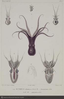 http://lbry-web-002.amnh.org/san/naturalhistories/b10495770_1.jpg