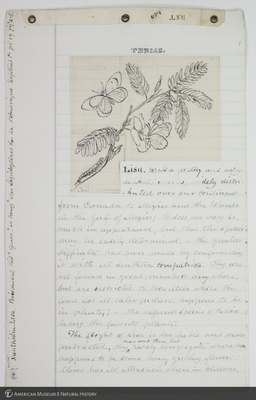 http://lbry-web-002.amnh.org/san/to_upload/titianbutterflies/b1083009_206.jpg