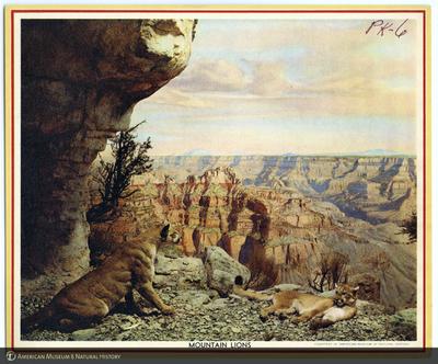 http://lbry-web-002.amnh.org/san/AMNH_postcards/100213323_54.jpg