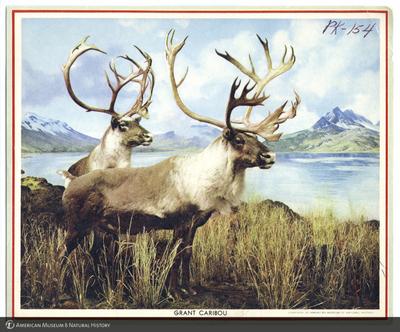 http://lbry-web-002.amnh.org/san/AMNH_postcards/100213323_52.jpg