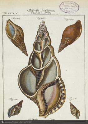 http://lbry-web-002.amnh.org/san/naturalhistories/b10657605_5.jpg