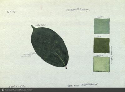 http://lbry-web-002.amnh.org/san/mo_exhibition/art002_b1_38b.jpg