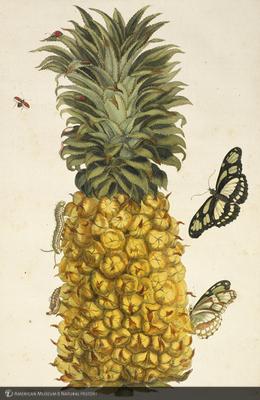 http://lbry-web-002.amnh.org/san/naturalhistories/b11797897_3.jpg