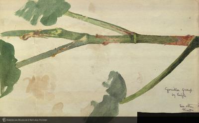 http://lbry-web-002.amnh.org/san/mo_exhibition/art002_b1_24.jpg