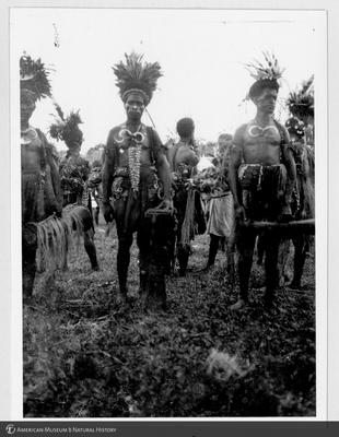 http://lbry-web-002.amnh.org/san/to_upload/Beck-PapuaNewGuinea/NG-5x7-prints/115689.jpg