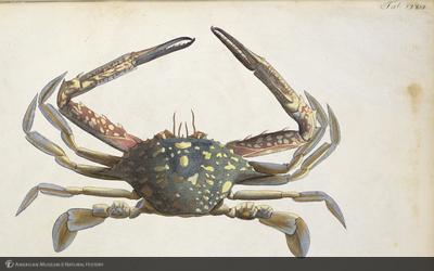 http://lbry-web-002.amnh.org/san/naturalhistories/b11448969_4.jpg