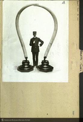 http://lbry-web-002.amnh.org/san/mo_exhibition/ppc_532_b08_f113_091.jpg