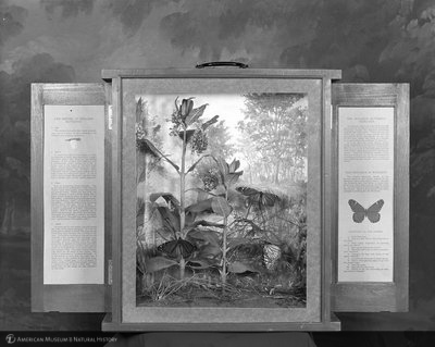 http://images.library.amnh.org/d/t/8x10/0001/00311981_l.jpg