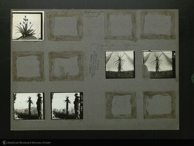 http://lbry-web-002.amnh.org/san/mo_exhibition/ppc_533_b11_f245_004.jpg