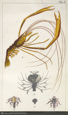 http://lbry-web-002.amnh.org/san/naturalhistories/b10468055_3.jpg