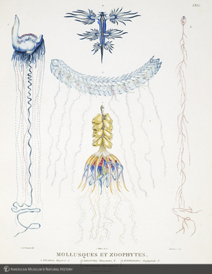 http://lbry-web-002.amnh.org/san/naturalhistories/b11429859_2.jpg