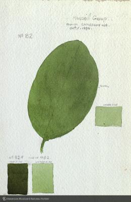 http://lbry-web-002.amnh.org/san/mo_exhibition/art002_b1_44a.jpg