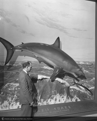 http://images.library.amnh.org/d/t/8x10/0002/00320511_l.jpg