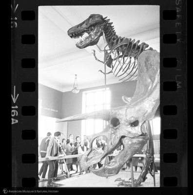 http://lbry-web-002.amnh.org/san/to_upload/35mm_halls_new/600175_16a.jpg
