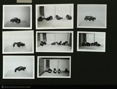 http://lbry-web-002.amnh.org/san/mo_exhibition/ppc_533_b13_f275_004a.jpg