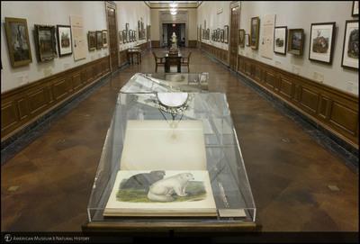 http://lbry-web-002.amnh.org/san/to_upload/photostudio/CC_Audubon4.jpg