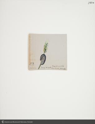 http://lbry-web-002.amnh.org/san/to_upload/titianbutterflies/b1083009_144.jpg
