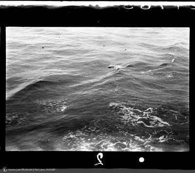 http://lbry-web-002.amnh.org/san/to_upload/35mm/VHC-T002.jpg