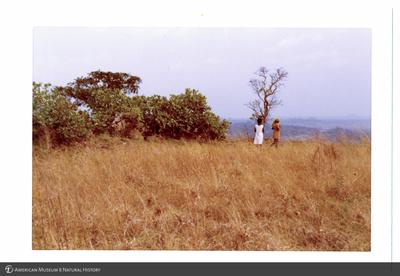 http://lbry-web-002.amnh.org/san/photoprintcollections/Arth/ppc-a78-100213279-01.jpg