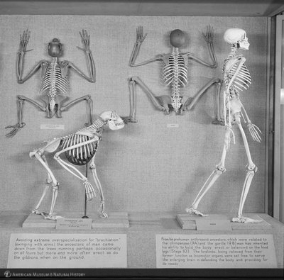 http://images.library.amnh.org/d/t/8x10/0001/00314255_l.jpg